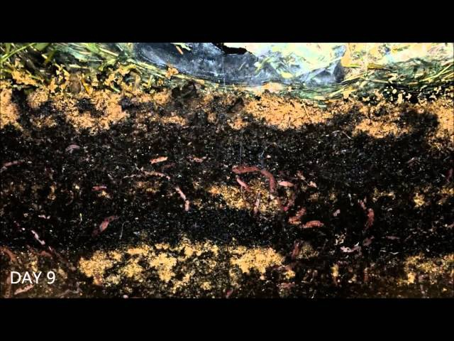 Worms At Work 20 Days Time Lapse Of Vermicomposting
