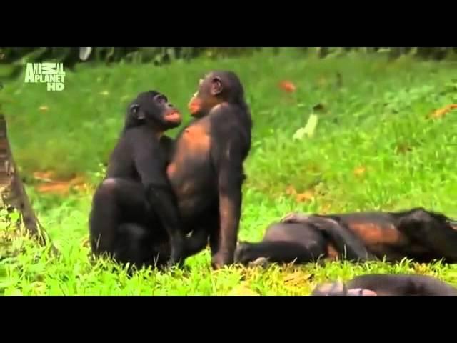 Суть женской логики на примере обезьян