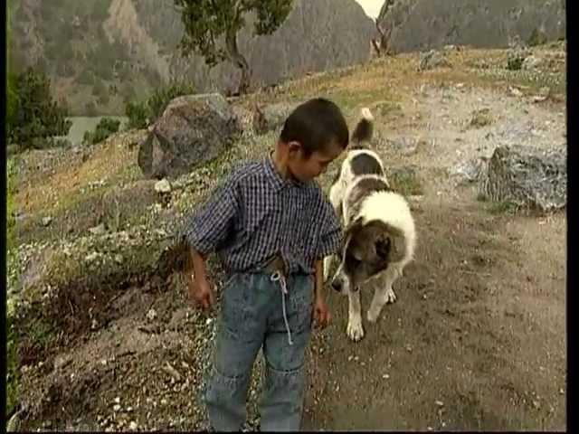 Таджик фильм, Сладкая родина, фильм Орзу Шарипова Таджикистан