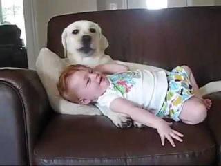 Пес играет с ребенком