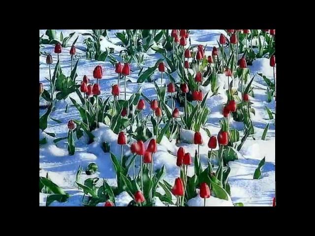 Н. Караченцов. Э. Рязанов.Ты укрой меня снегом, зима...