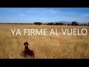 Trained in Mexico by RAMON FOYO Retriever Dog School