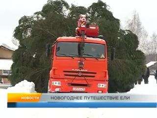 Новогоднее путешествие ели. Рыбинск