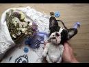 Обычный необычный день художника мишек тедди Teddy bear Artist teddy bear Makogon