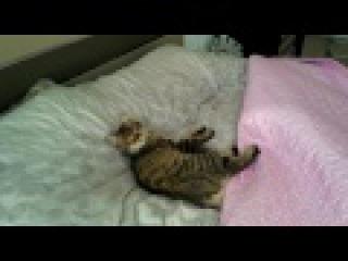 Sok! ok! ok! Umursamaz Kediye Yatak odasnda sust.. :)