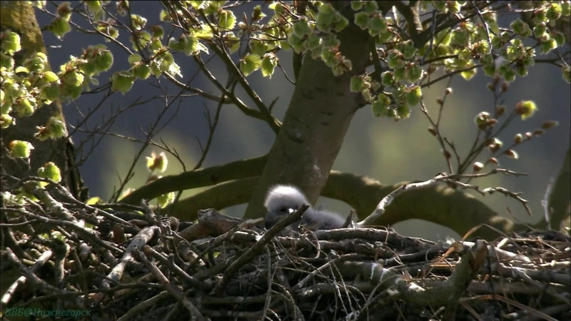 «Дикая природа Германии (01). Шпревальд» (Познавательный, животные, 2011)