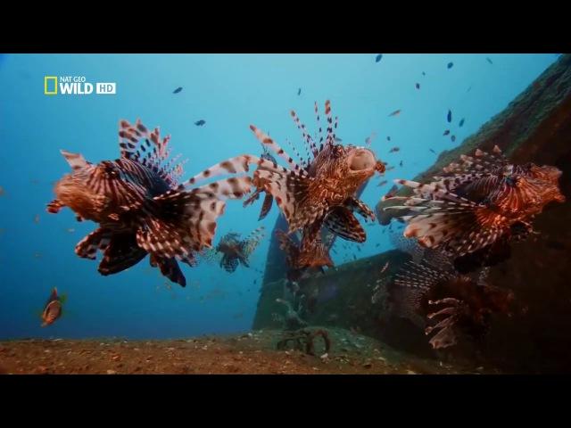 Дикая Шри Ланка Облачный лес документальный фильм HD