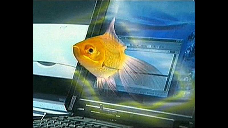 Джек пот для золушки Золотая рыбка