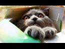 Подборка Приколов с Животными 2017/ Смешное Видео Про Животных/ Funny Animals 2017/