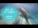 Blue sky of Florida, Gainesville, FL | Olya Huntley Vlog 61