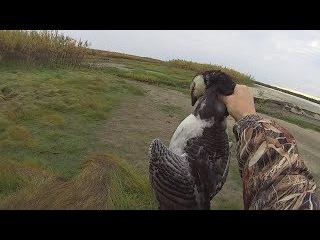 Охота на гуся осенью. И поимка крупной щуки троллингом. Goose hunting.