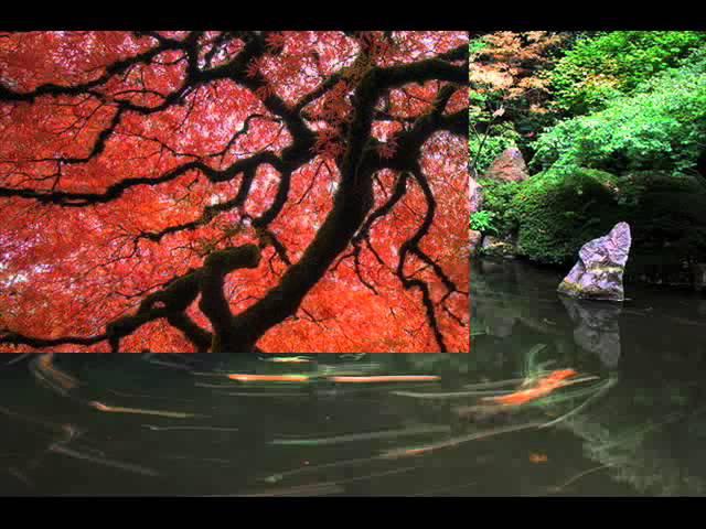 Японский садик музыка Японский саксофон релакс автор клипа Зоя Боур Москаленко