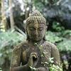 Маленький Будда едет в лес