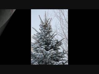 Зима в саду-проект «garden»