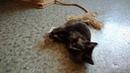 Котенок - кошечка в добрые ручки. 89098861930