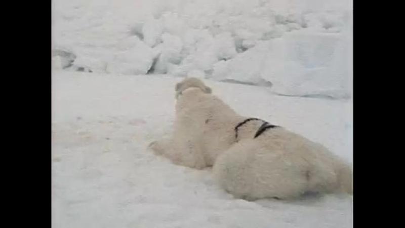 13 1988 Берингово море Сумерки над Аляской Подводная одиссея команды Кусто