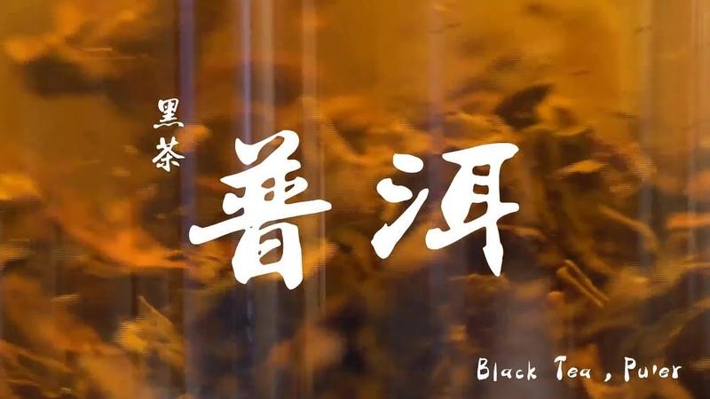 黑茶 普洱 Black Tea Pu'er