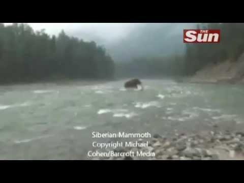 Woolly Mammoth filmed In Siberia В Сибири живой мамонт