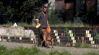 APBT Frisbee. Dog sport. Pit Brave Soul