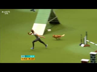 1. Agility Kennel Club British Open Final Part 1 - Small and Medium - Crufts 2019