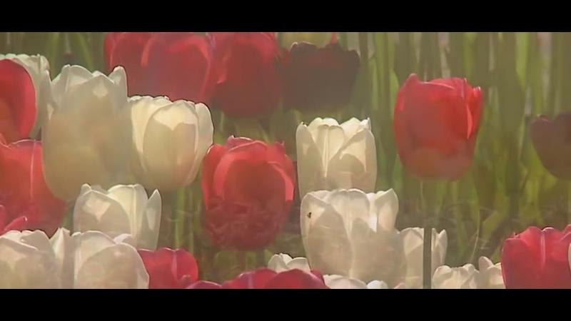 Дуже красиве привітання з 8 Березня ЖИВА ПРИРОДА з днем весни