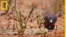 Une goutte du venin de ce serpent peut tuer 250 000 souris