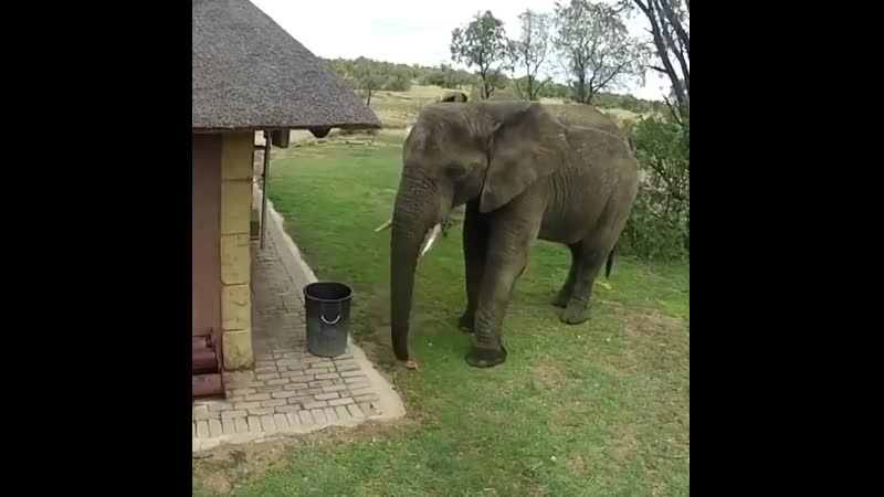Elephant caught throwing away litter into a trash can at a safari outpost