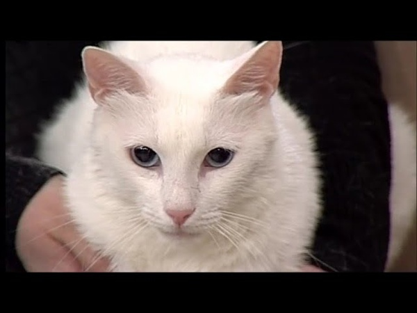 Roza Vostoka в гостях Утреннего кофе с котом Ичи