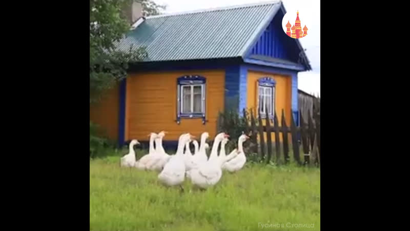 «Гусиная столица» в Кологриве