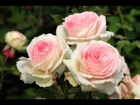 Закрытый онлайн мастер класс Ольги Базановой Цветы Часть 3