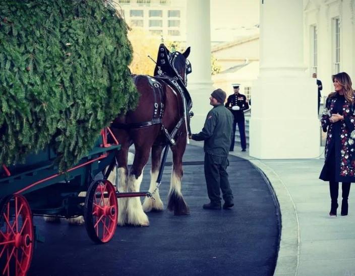 Главная елка страны: рождественское дерево прибыло в Белый дом ZXHhNIhSrSk