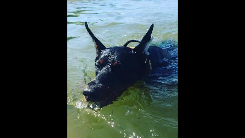 Занятия в воде, против течения