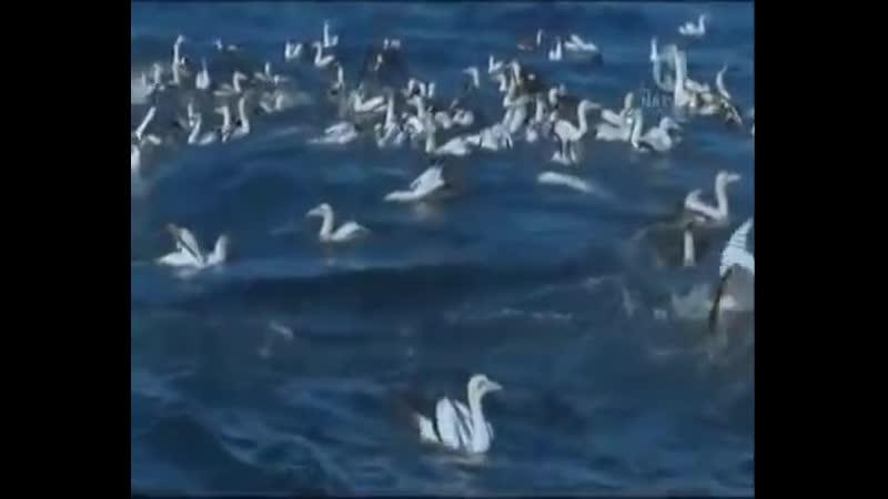 Большой Синий Кит Невероятный Гигант Океана