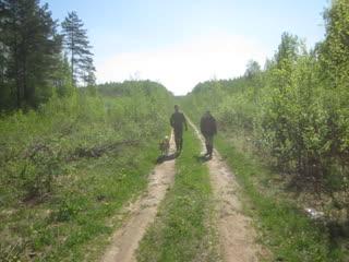 12 Мая . Следовая работа в лесисто - болотистой  местности .