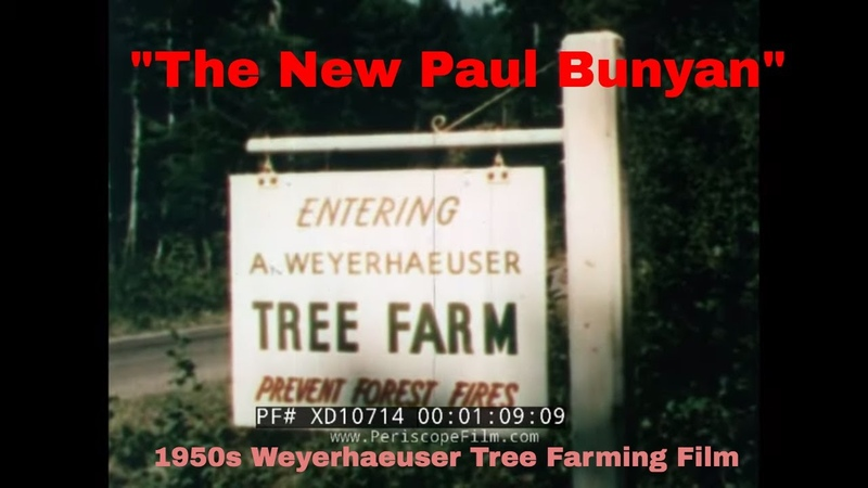 THE NEW PAUL BUNYAN 1952 WEYERHAEUSER FOREST PRODUCTS TREE FARMING LOGGING FILM XD10714