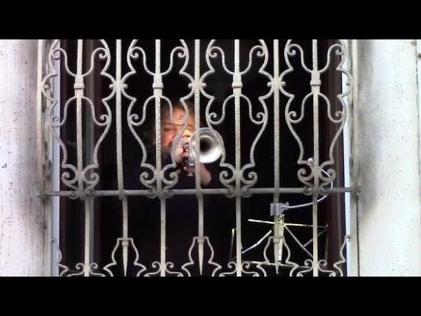 Coronavirus il trombettista suona 'O mia bela Madunina' dalla finestra i milanesi applaudono