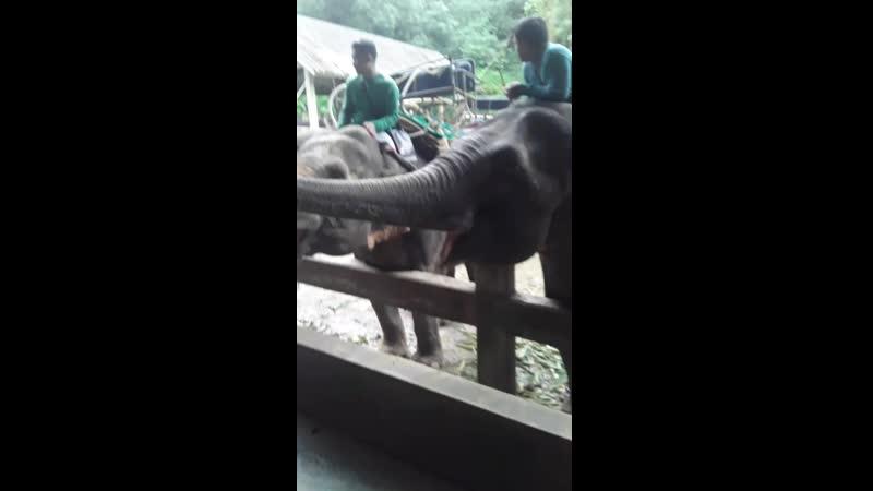 тай питомник кормление слонов смотреть онлайн без регистрации