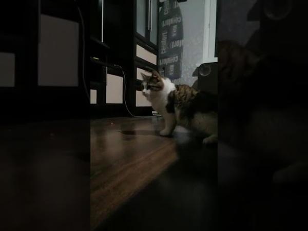 4995 01 02 2020 Котик Вильям уехал домой видео из дома