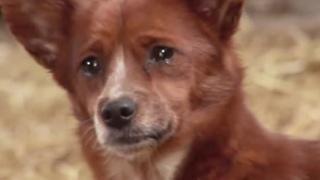 Пес не смог сдержать слез и заплакал, когда потерял свою подругу. Трогательная история