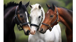 Cute And funny horse Videos Compilation cute moment of the horses - Baby animals #25