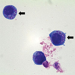 Кровепаразиты собак и кошек, изображение №3