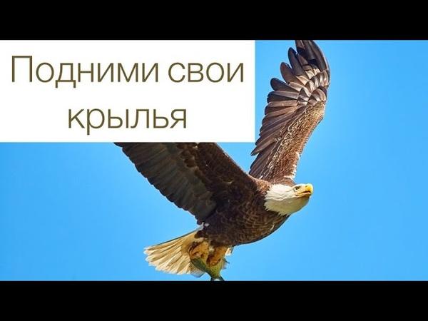 Подними свои крылья