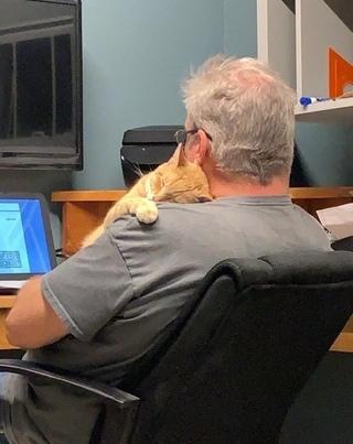 Поддержка котика на удаленке