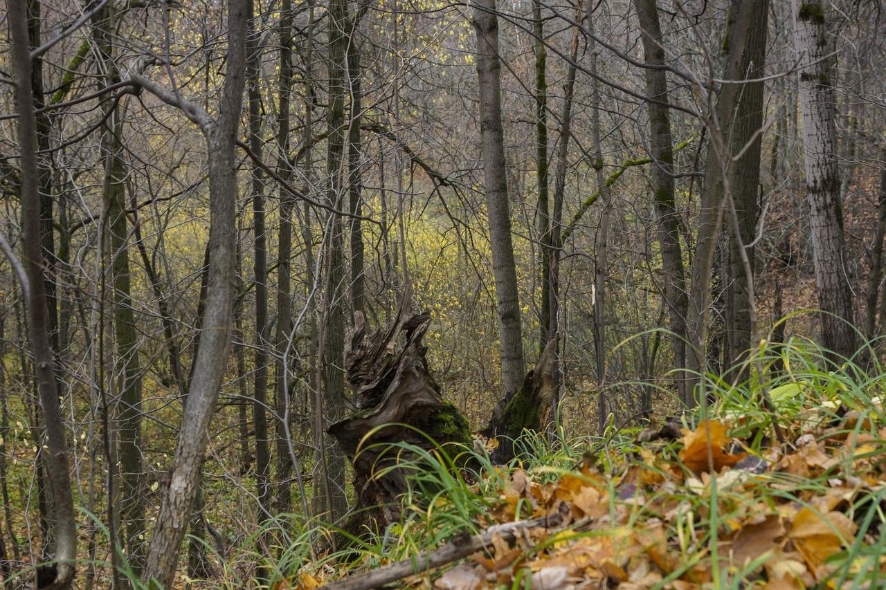Афиша Нижний Новгород «Темный лес. Мифологизация природы в фольклоре»