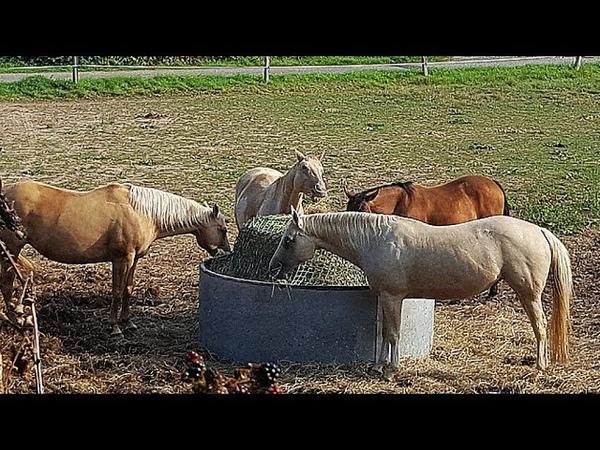 Лошади на диете Животные, животный мир, Аnimals,Tiere