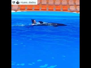 Плавание с дельфинами в открытом бассейне Театра морских животных Акватория