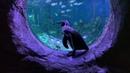 """VEGAS Крокус сити on Instagram: """"Пока посетителей нет, Цезарь и Платон с интересом изучают экспозицию Крокус Океанариума @crocuscity_oceanarium. Уд"""
