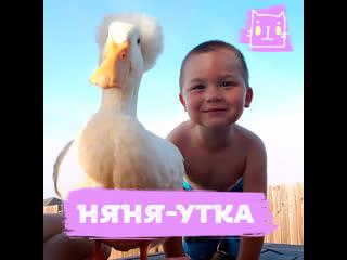Няня-утка и малыш Тайлер