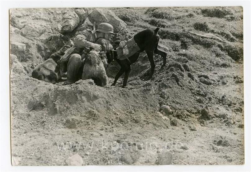 Рядовой вермахта Тассо, изображение №14