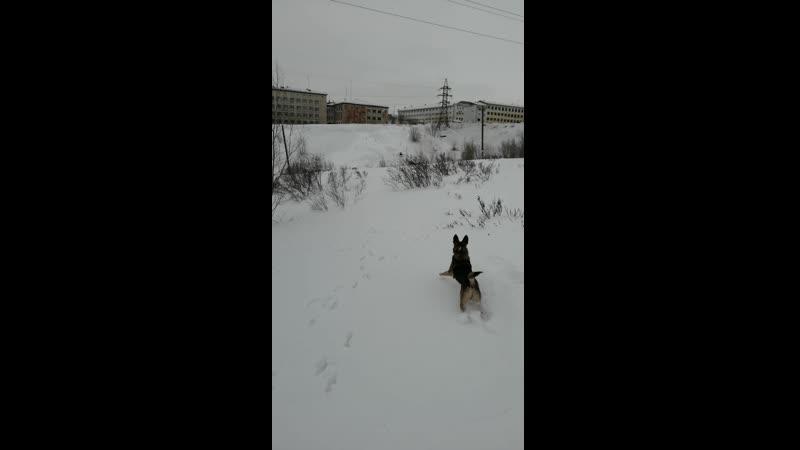 Воркута север Республика Коми Заполярье
